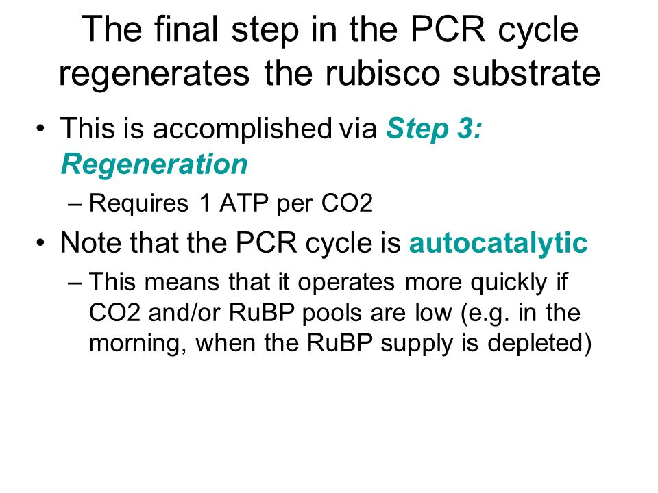 The final step in the PCR cycle regenerates the rubisco substrate This is accomplished via Step 3: Regeneration –Requires 1 ATP per CO2 Note that the PCR cycle is autocatalytic –This means that it operates more quickly if CO2 and/or RuBP pools are low (e.g.