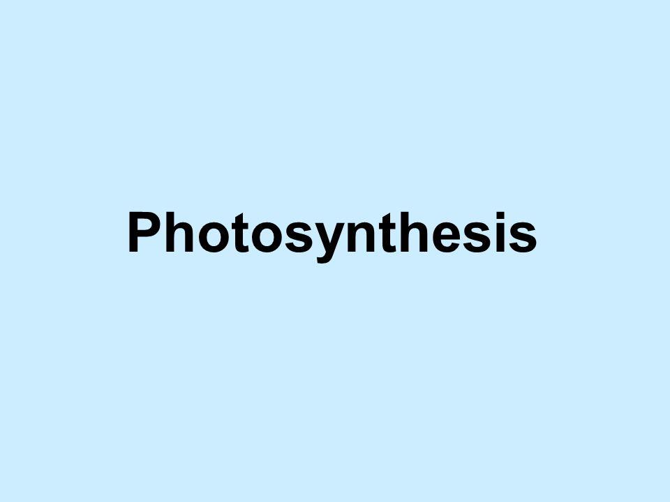 Cyclic Photophosphorylation u Uses Photosystem I only.
