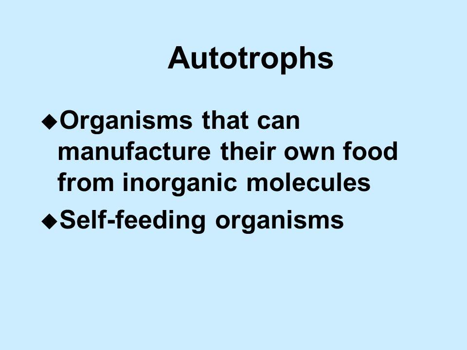 Autotrophs u Organisms that can manufacture their own food from inorganic molecules u Self-feeding organisms