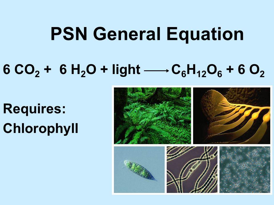 Chlorophylls u Has CHON and Mg.u Several types possible.