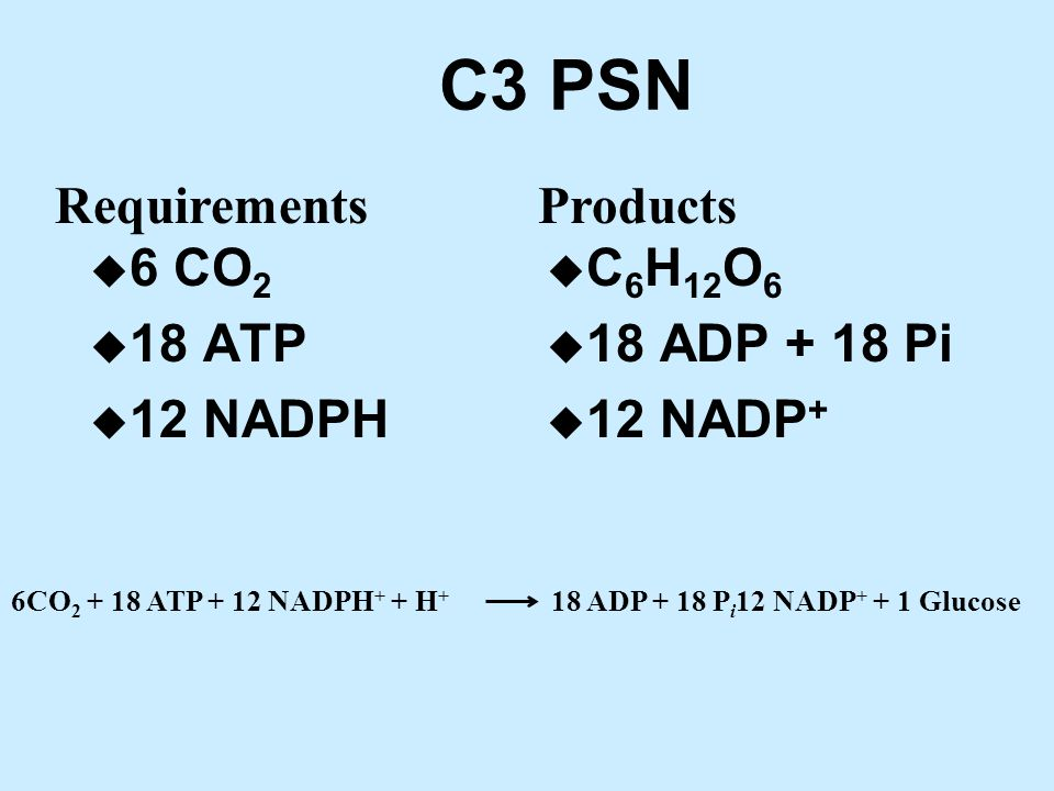 C3 PSN u 6 CO 2 u 18 ATP u 12 NADPH u C 6 H 12 O 6 u 18 ADP + 18 Pi u 12 NADP + RequirementsProducts 6CO 2 + 18 ATP + 12 NADPH + + H + 18 ADP + 18 P i 12 NADP + + 1 Glucose