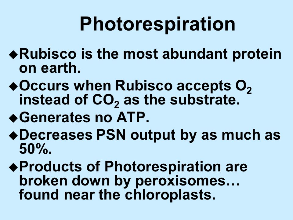Photorespiration u Rubisco is the most abundant protein on earth.