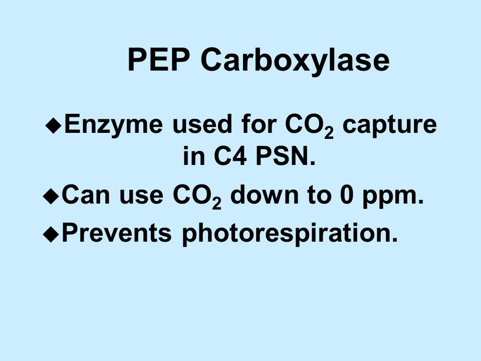 PEP Carboxylase u Enzyme used for CO 2 capture in C4 PSN.