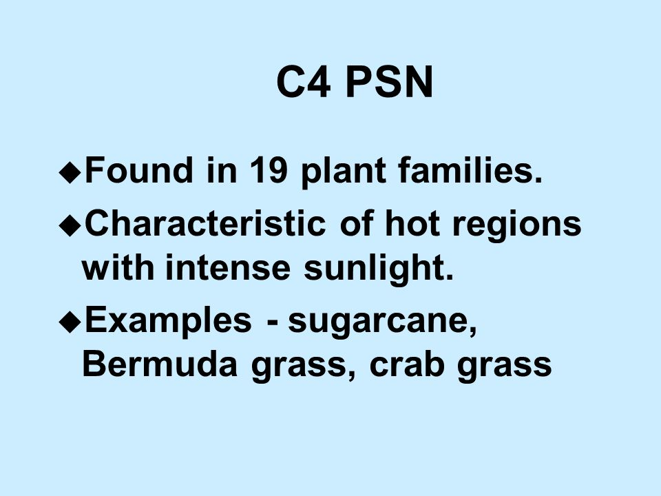 C4 PSN u Found in 19 plant families. u Characteristic of hot regions with intense sunlight.