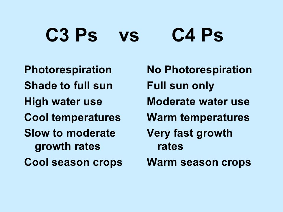 C3 Ps vs C4 Ps Photorespiration Shade to full sun High water use Cool temperatures Slow to moderate growth rates Cool season crops No Photorespiration Full sun only Moderate water use Warm temperatures Very fast growth rates Warm season crops