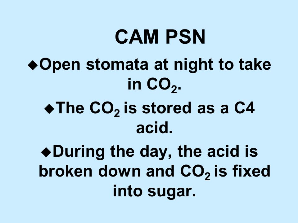 CAM PSN u Open stomata at night to take in CO 2. u The CO 2 is stored as a C4 acid.