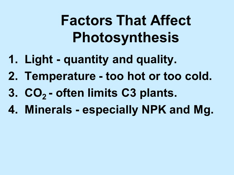 Factors That Affect Photosynthesis 1. Light - quantity and quality.