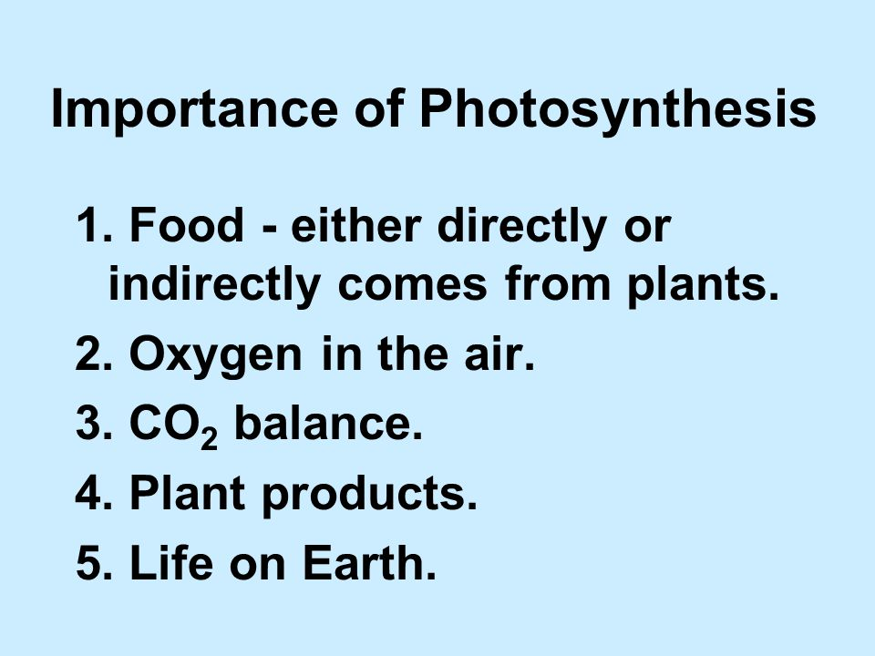 Importance of Photosynthesis 1. Food - either directly or indirectly comes from plants.