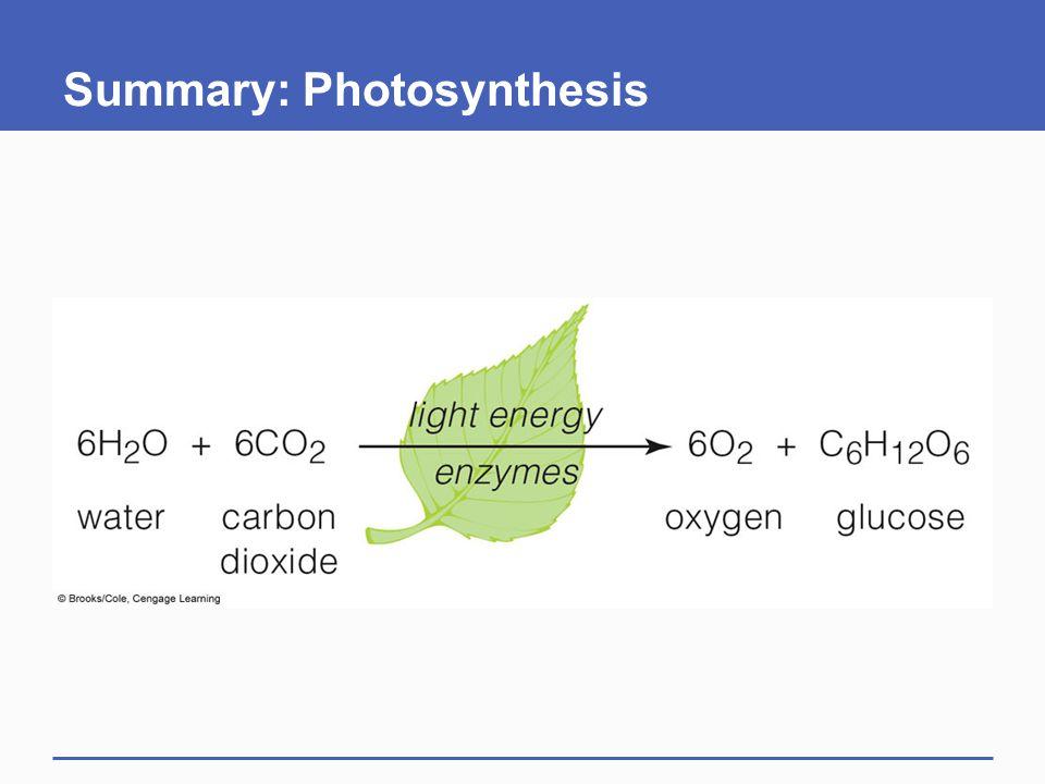 Summary: Photosynthesis