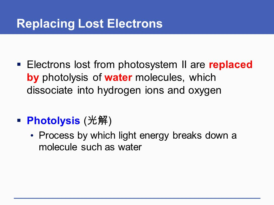 Replacing Lost Electrons  Electrons lost from photosystem II are replaced by photolysis of water molecules, which dissociate into hydrogen ions and o