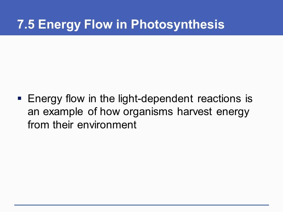 7.5 Energy Flow in Photosynthesis  Energy flow in the light-dependent reactions is an example of how organisms harvest energy from their environment