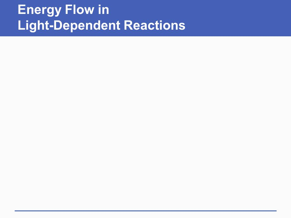 Energy Flow in Light-Dependent Reactions