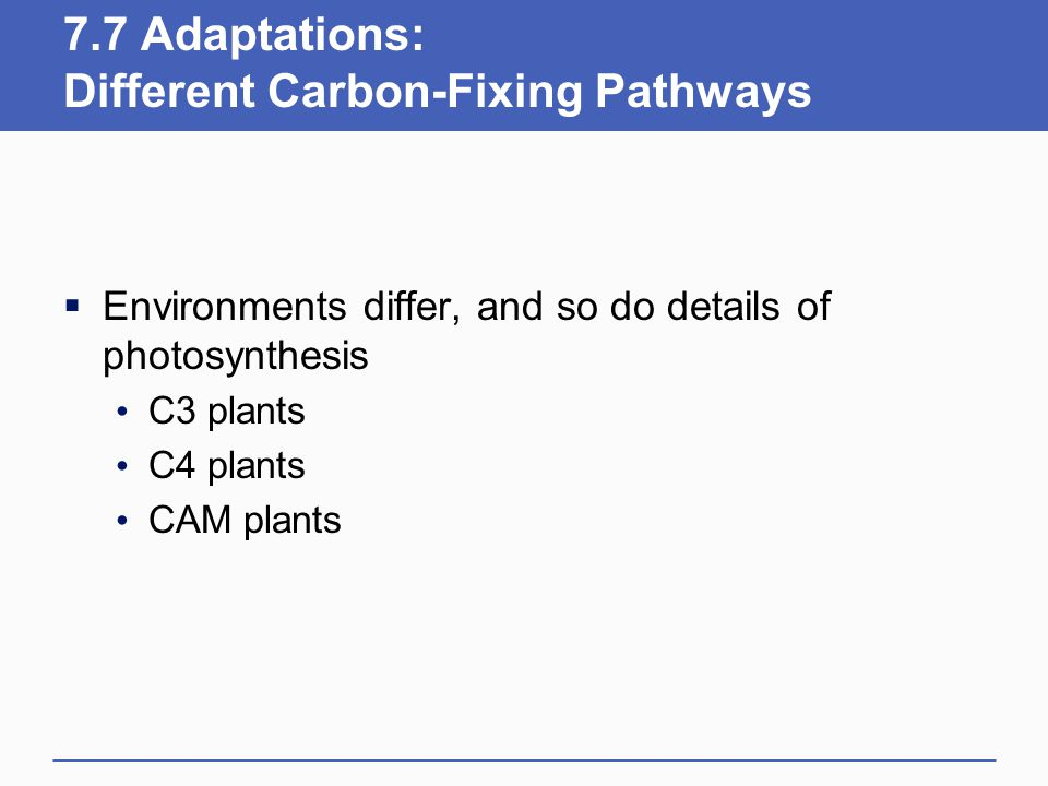 7.7 Adaptations: Different Carbon-Fixing Pathways  Environments differ, and so do details of photosynthesis C3 plants C4 plants CAM plants