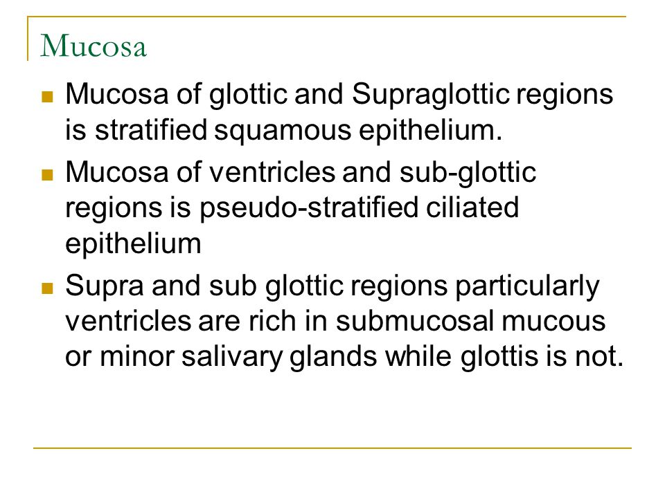Mucosa Mucosa of glottic and Supraglottic regions is stratified squamous epithelium. Mucosa of ventricles and sub-glottic regions is pseudo-stratified