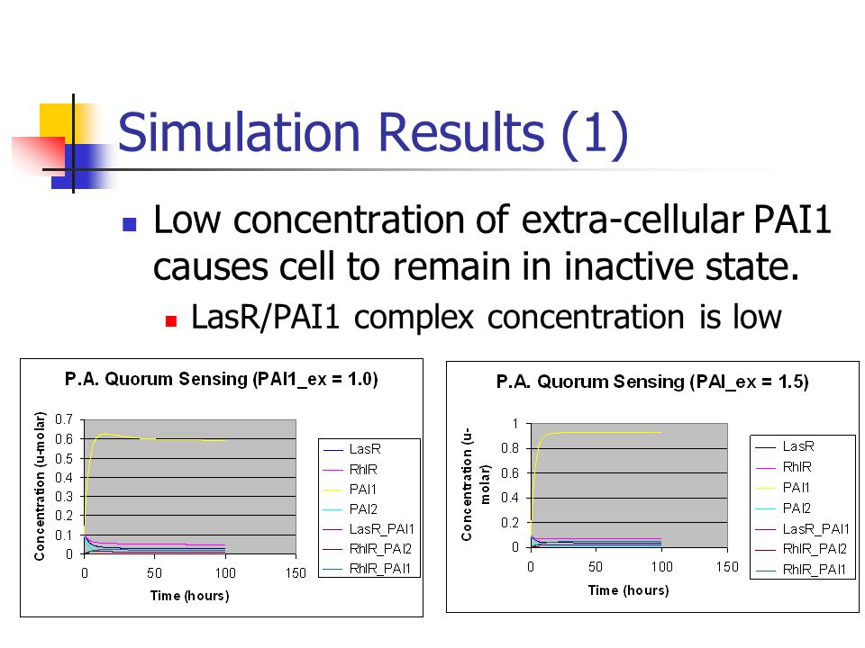 Simulation Results (1) Low concentration of extra-cellular PAI1 causes cell to remain in inactive state. LasR/PAI1 complex concentration is low