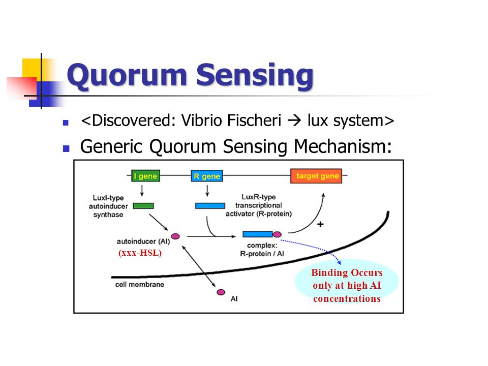 Quorum Sensing Generic Quorum Sensing Mechanism: (xxx-HSL) Binding Occurs only at high AI concentrations