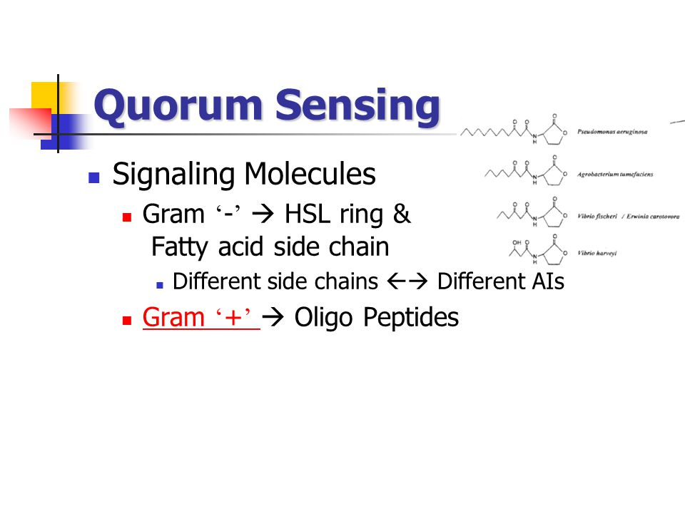 Quorum Sensing Signaling Molecules Gram ' - '  HSL ring & Fatty acid side chain Different side chains  Different AIs Gram ' + '  Oligo Peptides Gr