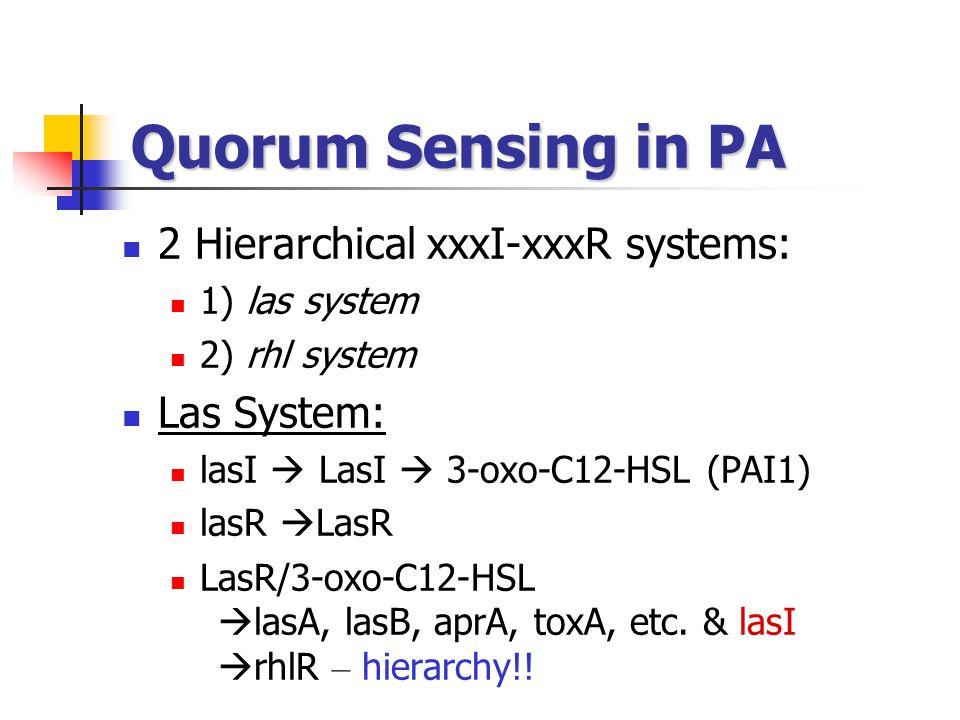 Quorum Sensing in PA 2 Hierarchical xxxI-xxxR systems: 1) las system 2) rhl system Las System: lasI  LasI  3-oxo-C12-HSL (PAI1) lasR  LasR LasR/3-oxo-C12-HSL  lasA, lasB, aprA, toxA, etc.