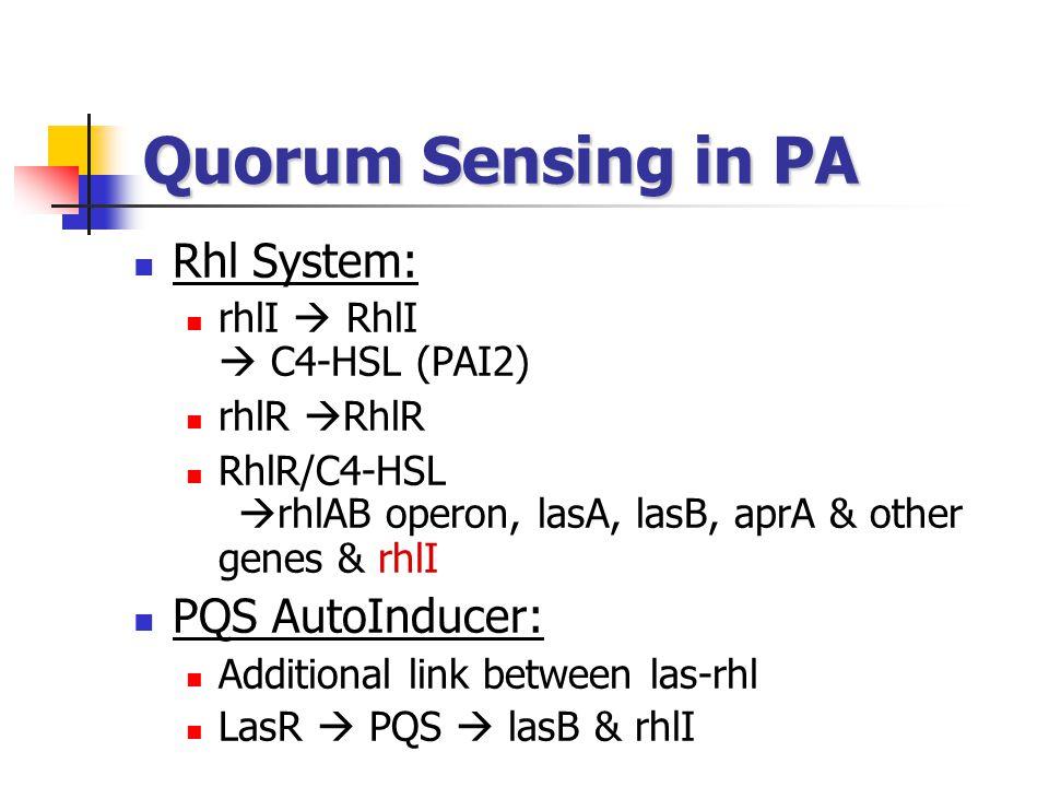 Quorum Sensing in PA Rhl System: rhlI  RhlI  C4-HSL (PAI2) rhlR  RhlR RhlR/C4-HSL  rhlAB operon, lasA, lasB, aprA & other genes & rhlI PQS AutoInducer: Additional link between las-rhl LasR  PQS  lasB & rhlI