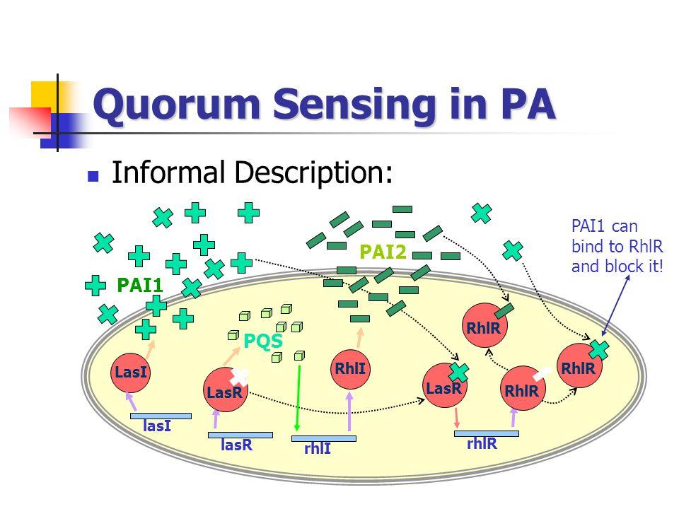 Quorum Sensing in PA Informal Description: lasI lasR LasI PAI1 LasR PQS LasR rhlI rhlR RhlI PAI2 RhlR PAI1 can bind to RhlR and block it!