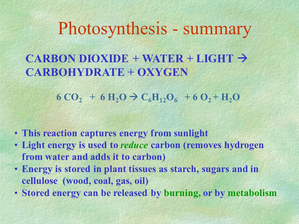 Photosynthesis - summary CARBON DIOXIDE + WATER + LIGHT  CARBOHYDRATE + OXYGEN 6 CO 2 + 6 H 2 O  C 6 H 12 O 6 + 6 O 2 + H 2 O This reaction captures energy from sunlight Light energy is used to reduce carbon (removes hydrogen from water and adds it to carbon) Energy is stored in plant tissues as starch, sugars and in cellulose (wood, coal, gas, oil) Stored energy can be released by burning, or by metabolism