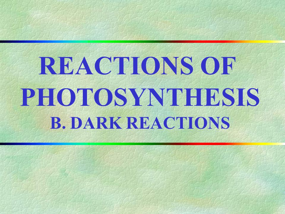 REACTIONS OF PHOTOSYNTHESIS B. DARK REACTIONS II.CHAPTER OUTLINE