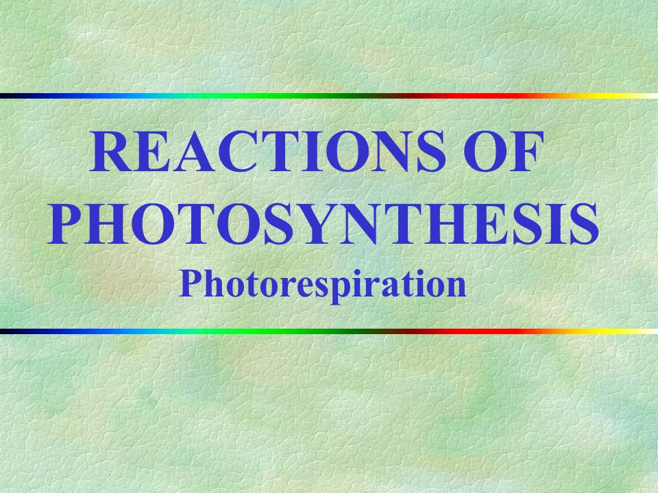 REACTIONS OF PHOTOSYNTHESIS Photorespiration II.CHAPTER OUTLINE