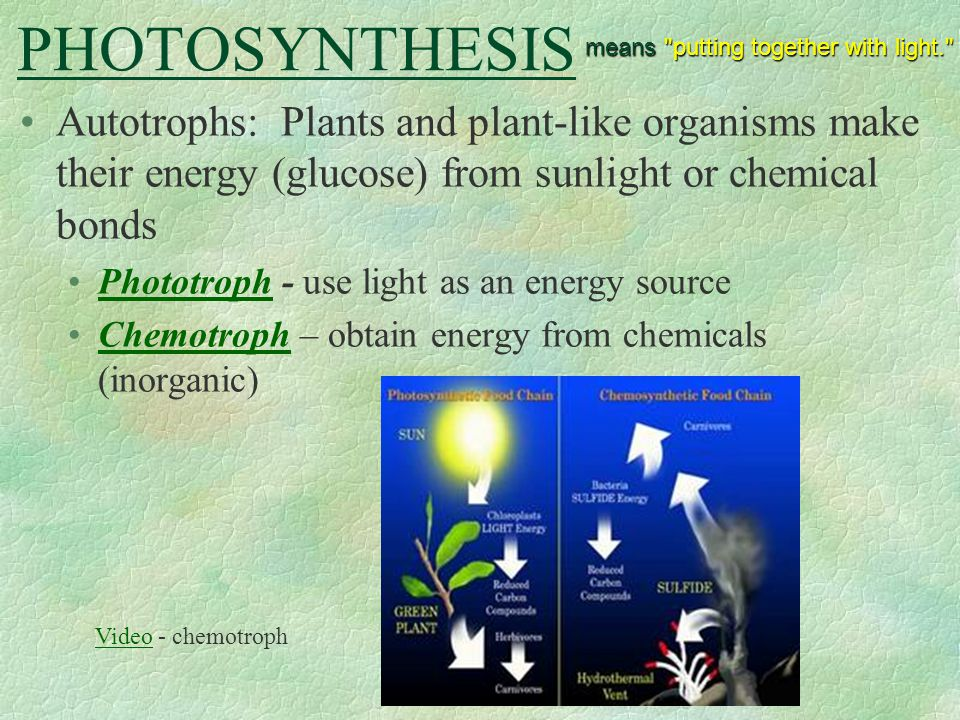 Heterotrophs Animals and other organisms that must get energy from food instead of sunlight or inorganic chemicals Depend on autotrophs to obtain energy