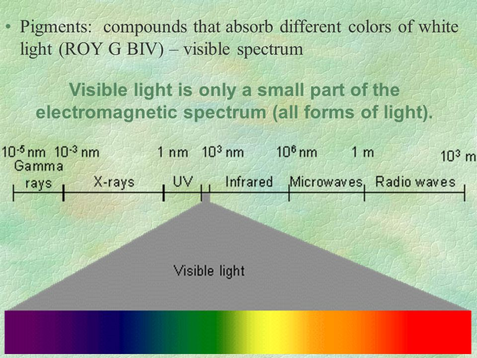 Pigments: compounds that absorb different colors of white light (ROY G BIV) – visible spectrum Visible light is only a small part of the electromagnet