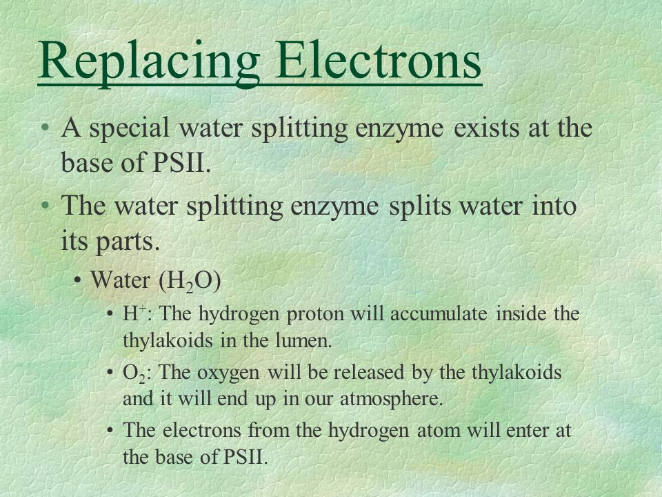 Replacing Electrons A special water splitting enzyme exists at the base of PSII. The water splitting enzyme splits water into its parts. Water (H 2 O)