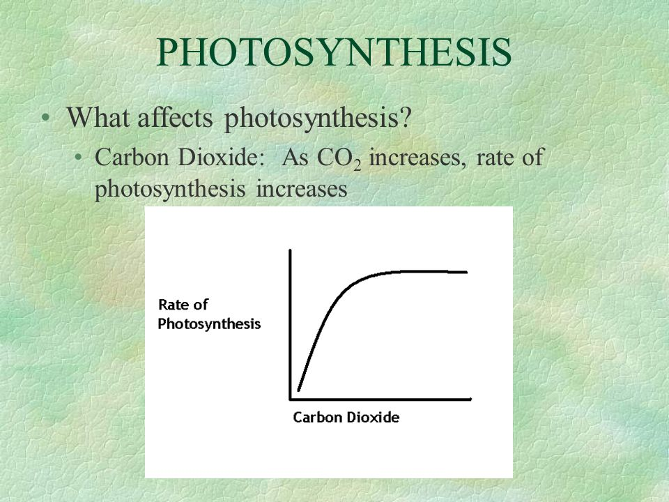 PHOTOSYNTHESIS What affects photosynthesis? Carbon Dioxide: As CO 2 increases, rate of photosynthesis increases