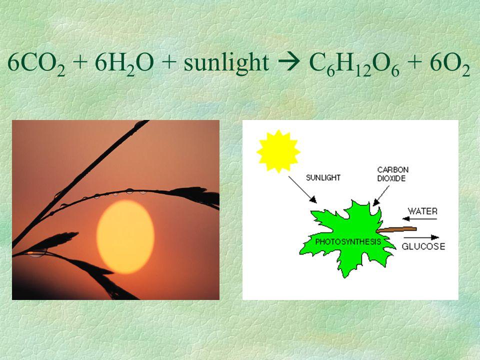 Chloroplasts make the oxygen too!