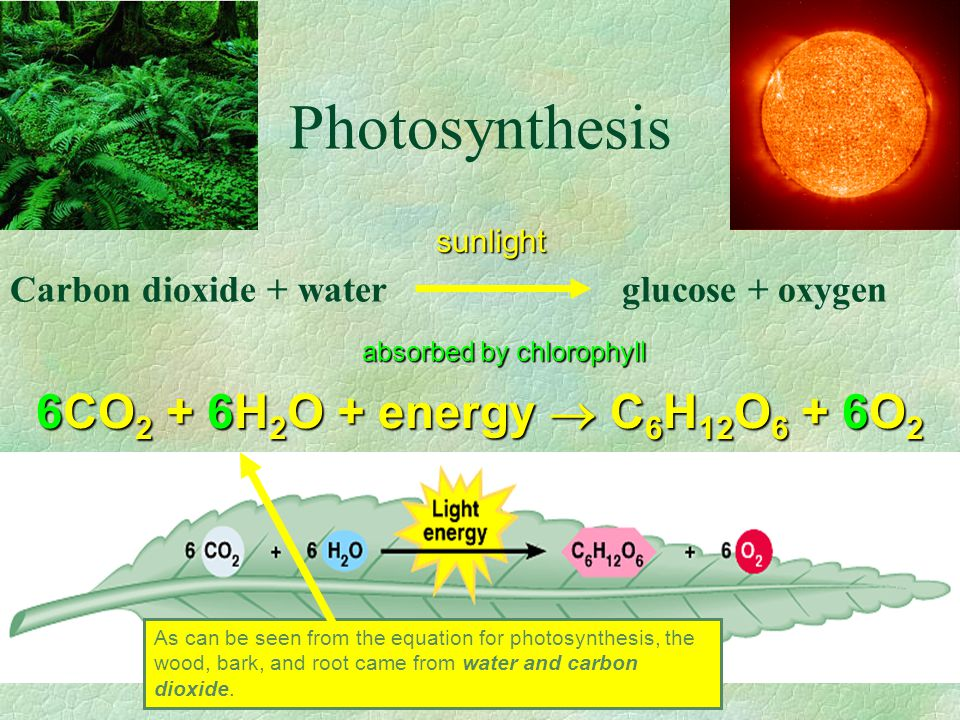 C 4 Photosynthesis : C4 plants Called C 4 because the CO 2 is first incorporated into a 4-carbon compound.