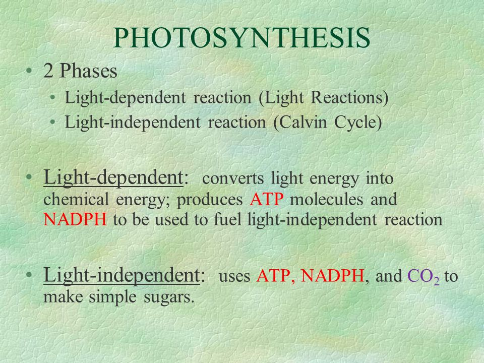 CAM Photosynthesis : Crassulacean Acid Metabolism Named after plant family in which it was first found (Crassulaceae) & because CO 2 is stored as an acid before use in photosynthesis.