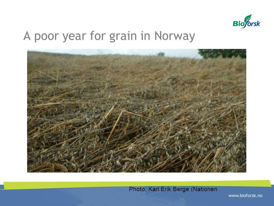 A poor year for grain in Norway Photo: Karl Erik Berge (Nationen