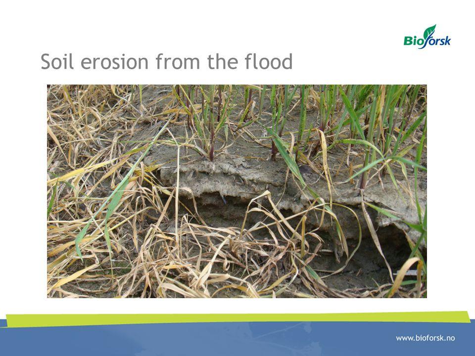 Soil erosion from the flood