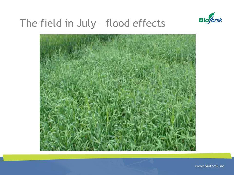The field in July – flood effects