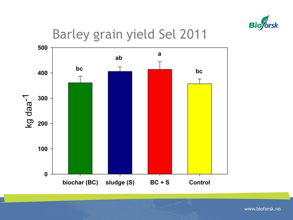 Barley grain yield Sel 2011
