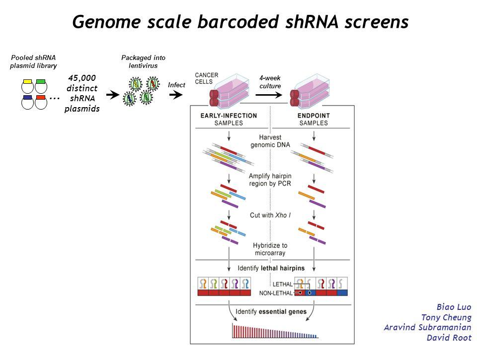 Genome scale barcoded shRNA screens Biao Luo Tony Cheung Aravind Subramanian David Root Pooled shRNA plasmid library 45,000 distinct shRNA plasmids …