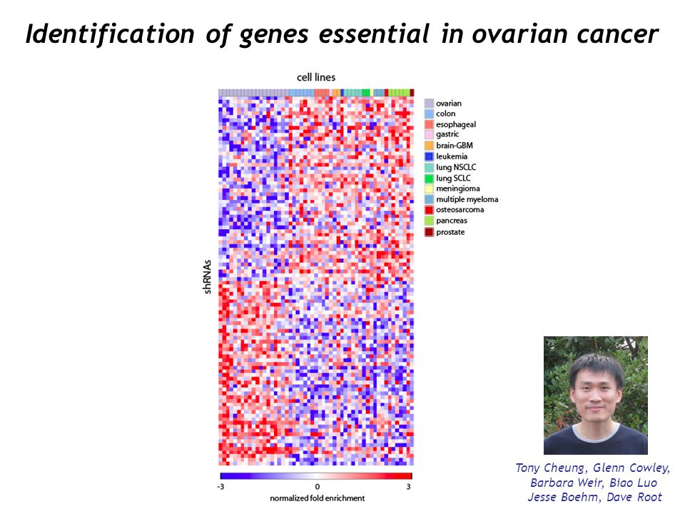 Identification of genes essential in ovarian cancer Tony Cheung, Glenn Cowley, Barbara Weir, Biao Luo Jesse Boehm, Dave Root