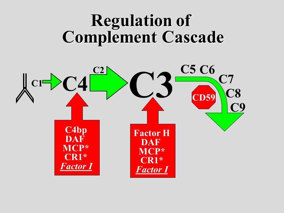 C1 C4 C3 C2 C5 C6 C7 C8 C9 C4bp DAF MCP* CR1* Factor I Factor H DAF MCP* CR1* Factor I CD59 Regulation of Complement Cascade