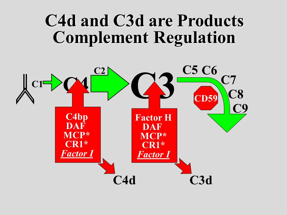 C1 C4 C3 C2 C5 C6 C7 C8 C9 C4bp DAF MCP* CR1* Factor I Factor H DAF MCP* CR1* Factor I CD59 C4dC3d C4d and C3d are Products Complement Regulation