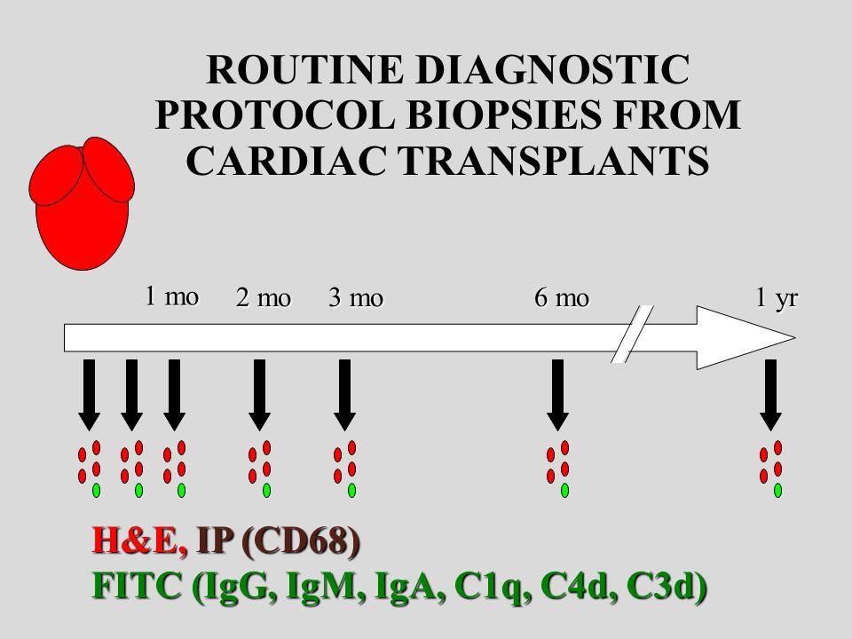 ROUTINE DIAGNOSTIC PROTOCOL BIOPSIES FROM CARDIAC TRANSPLANTS 1 mo 2 mo 3 mo 6 mo 1 yr H&E, IP (CD68) FITC (IgG, IgM, IgA, C1q, C4d, C3d)