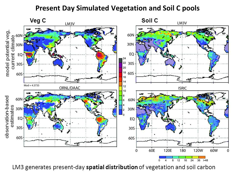 Present Day Simulated Vegetation and Soil C pools model potential veg, current climate observation-based estimates LM3 generates present-day spatial d