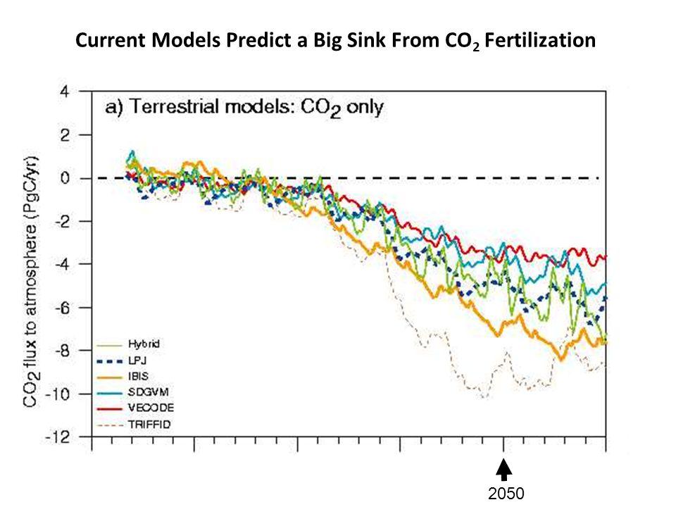 2050 Current Models Predict a Big Sink From CO 2 Fertilization