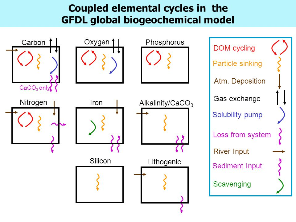 Coupled elemental cycles in the GFDL global biogeochemical model Carbon Oxygen Phosphorus Nitrogen Iron Alkalinity/CaCO 3 DOM cycling Particle sinking