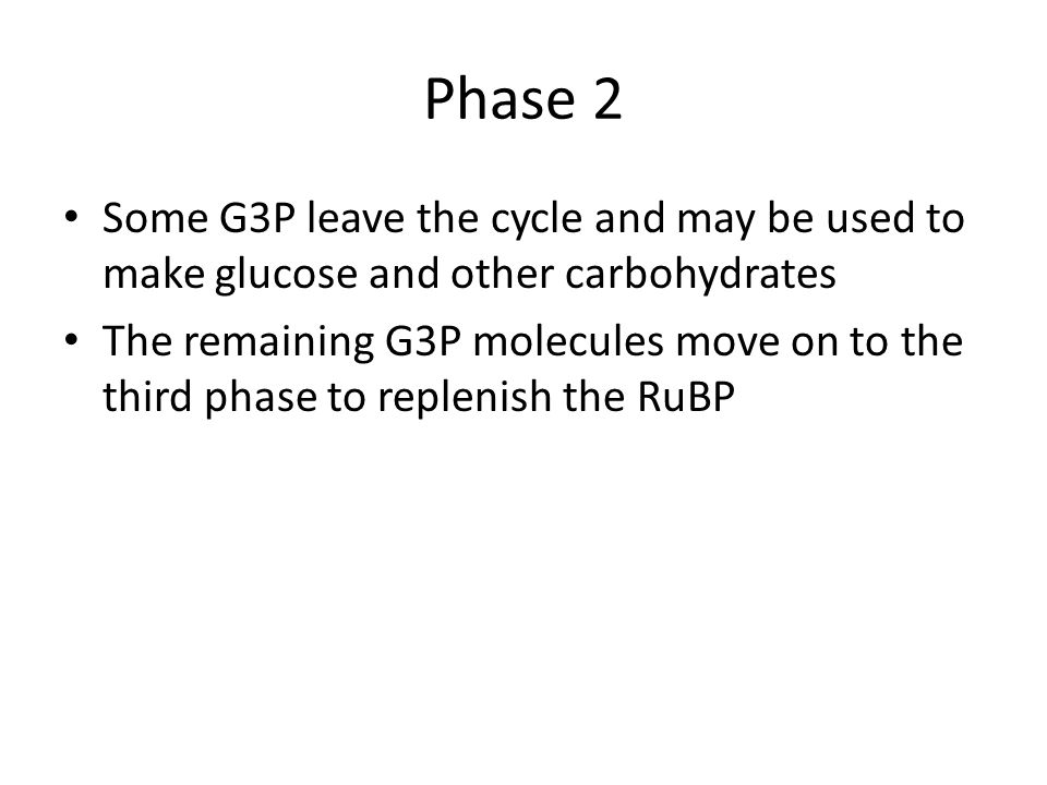 Phase 2 Some G3P leave the cycle and may be used to make glucose and other carbohydrates The remaining G3P molecules move on to the third phase to replenish the RuBP