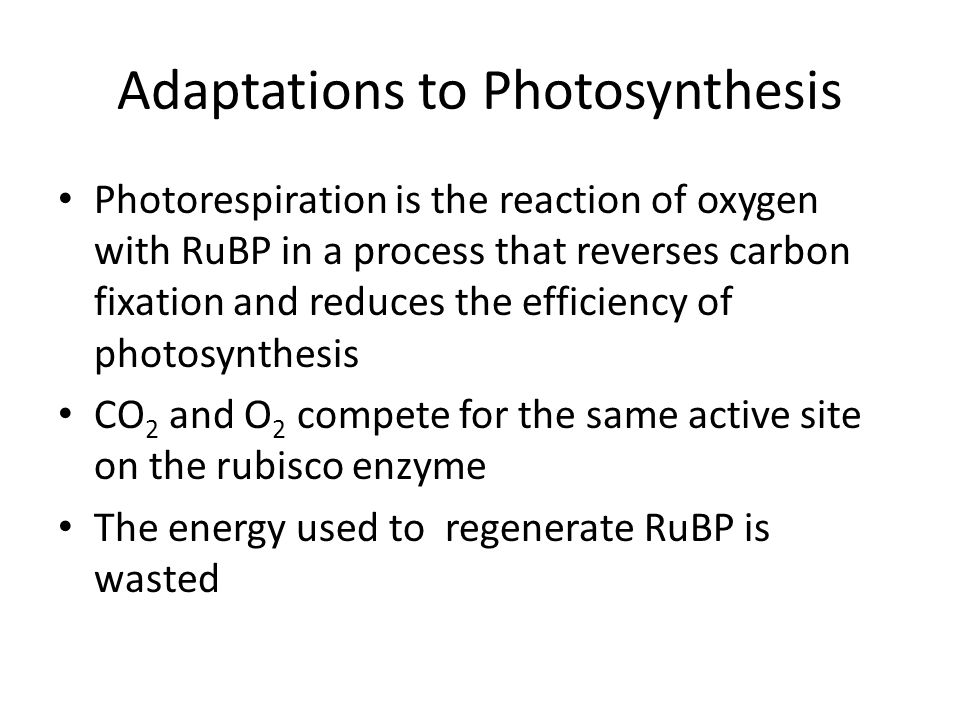 Adaptations to Photosynthesis Photorespiration is the reaction of oxygen with RuBP in a process that reverses carbon fixation and reduces the efficiency of photosynthesis CO 2 and O 2 compete for the same active site on the rubisco enzyme The energy used to regenerate RuBP is wasted