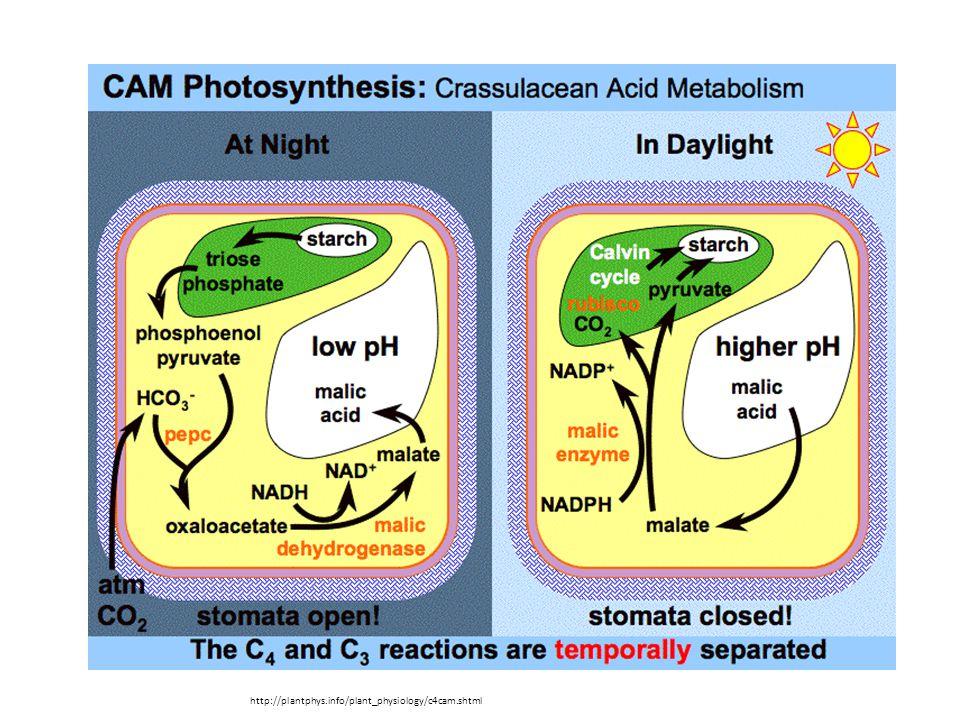http://plantphys.info/plant_physiology/c4cam.shtml