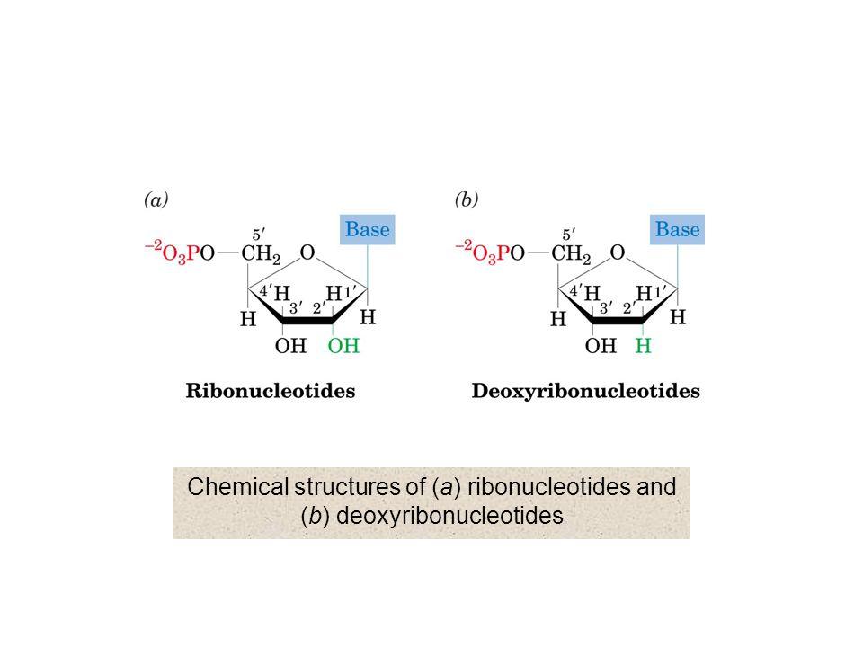 Mechanism of base-catalyzed RNA hydrolysis